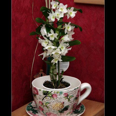 Orchideen…
