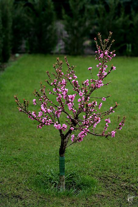 blog_3137-nektarine.jpg