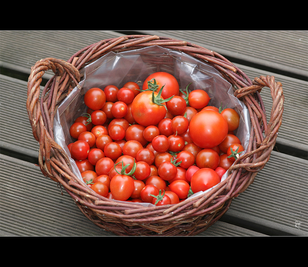 tomaten_7662.jpg