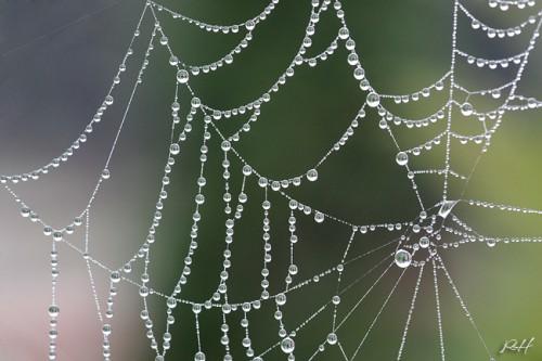 Perlenschmuck der Natur