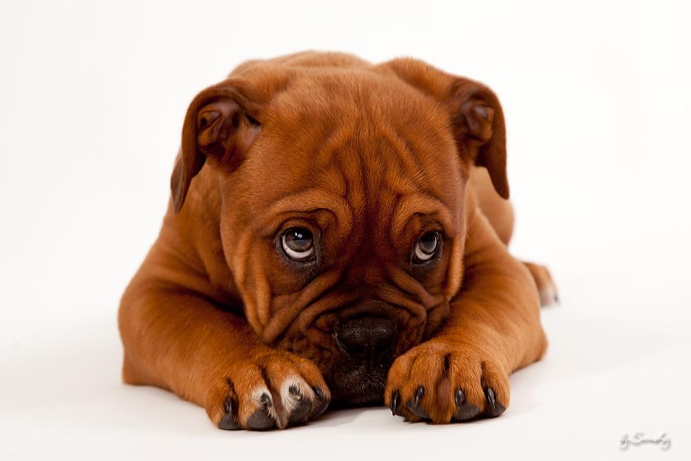 Fotoshooting mit der Hundedame Bruni