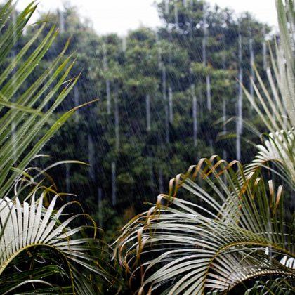 Es regnet im Paradies