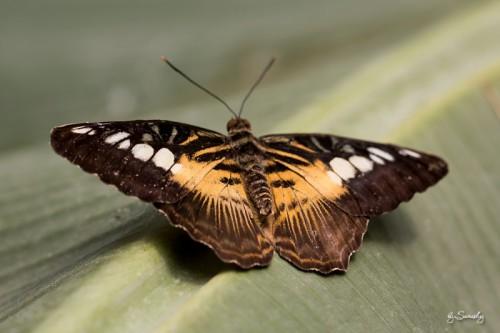 Besuch auf der Schmetterlingsfarm