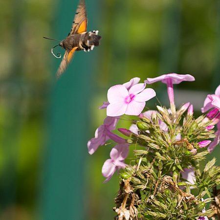 Ich zähle nun für eine Weile Schmetterlinge…