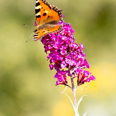 Schmetterlinge…