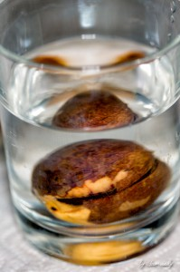 Avocado-Kern im Wasserglas
