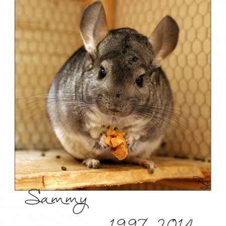 in loving memory – Sammy