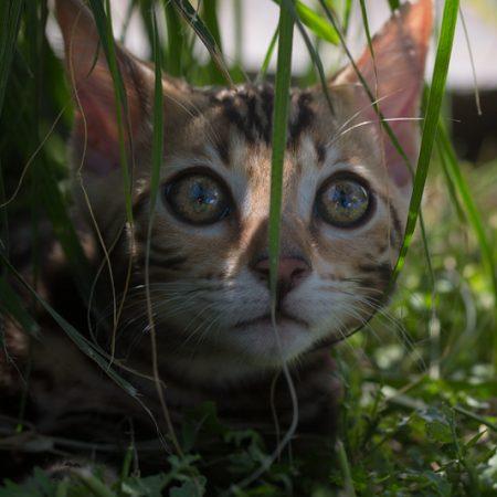 Sukis erstes Abenteuer in unserem Garten