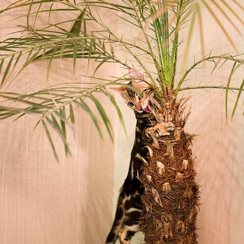 Suki und die Palme