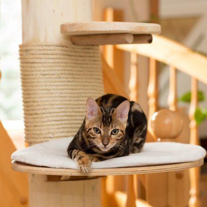 Sisal für den Katzenkletterbaum