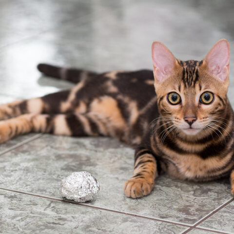 Willst Du mit mir spielen?