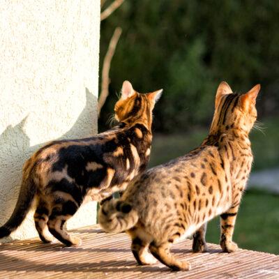 Suki & Percy