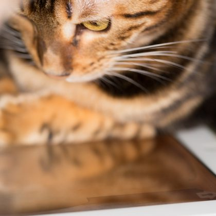 Reading latest cat news